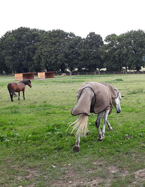 Des chevaux dans le pré d'Ékinétik
