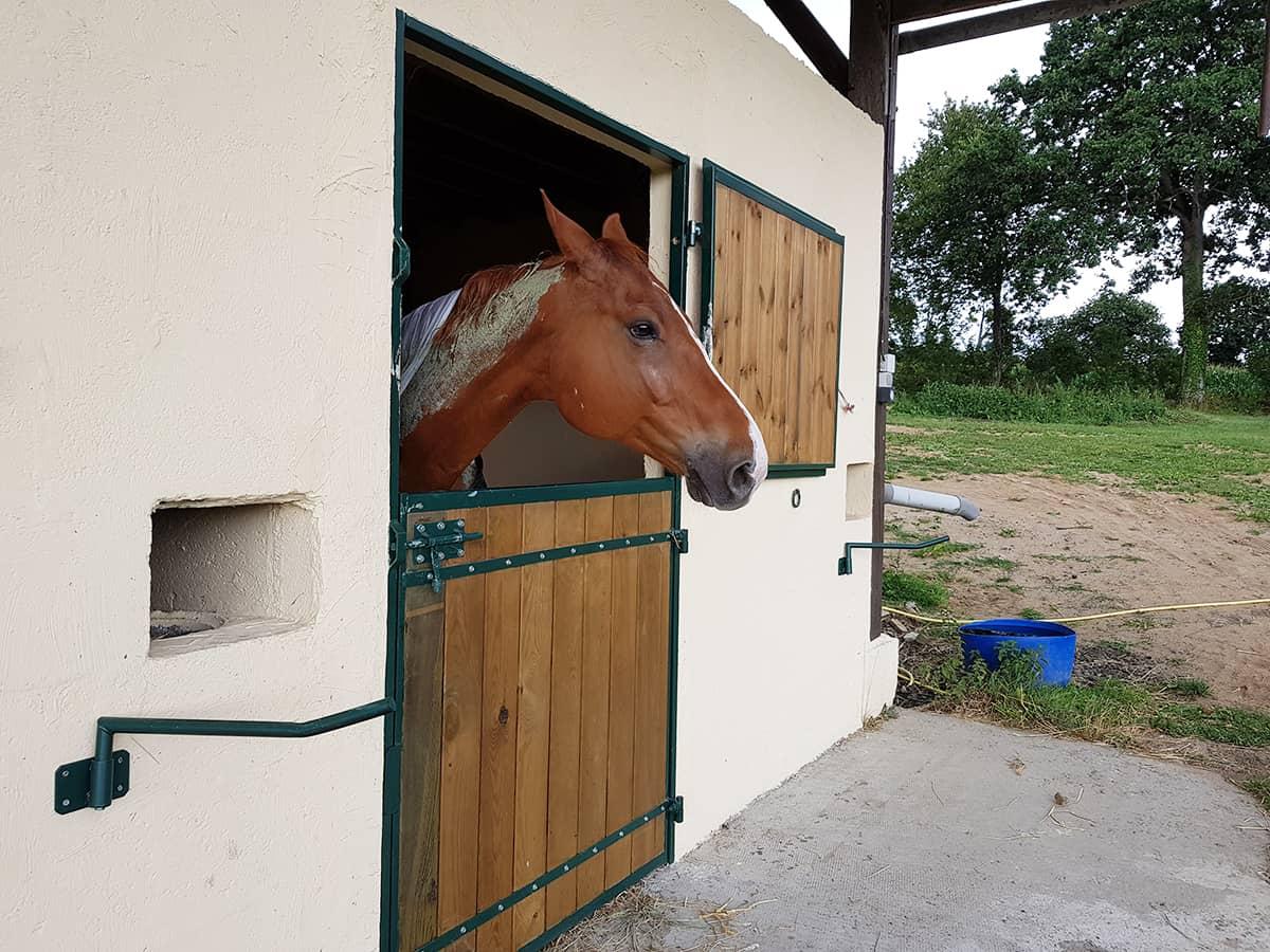 Un cheval en pension chez Ékinétik
