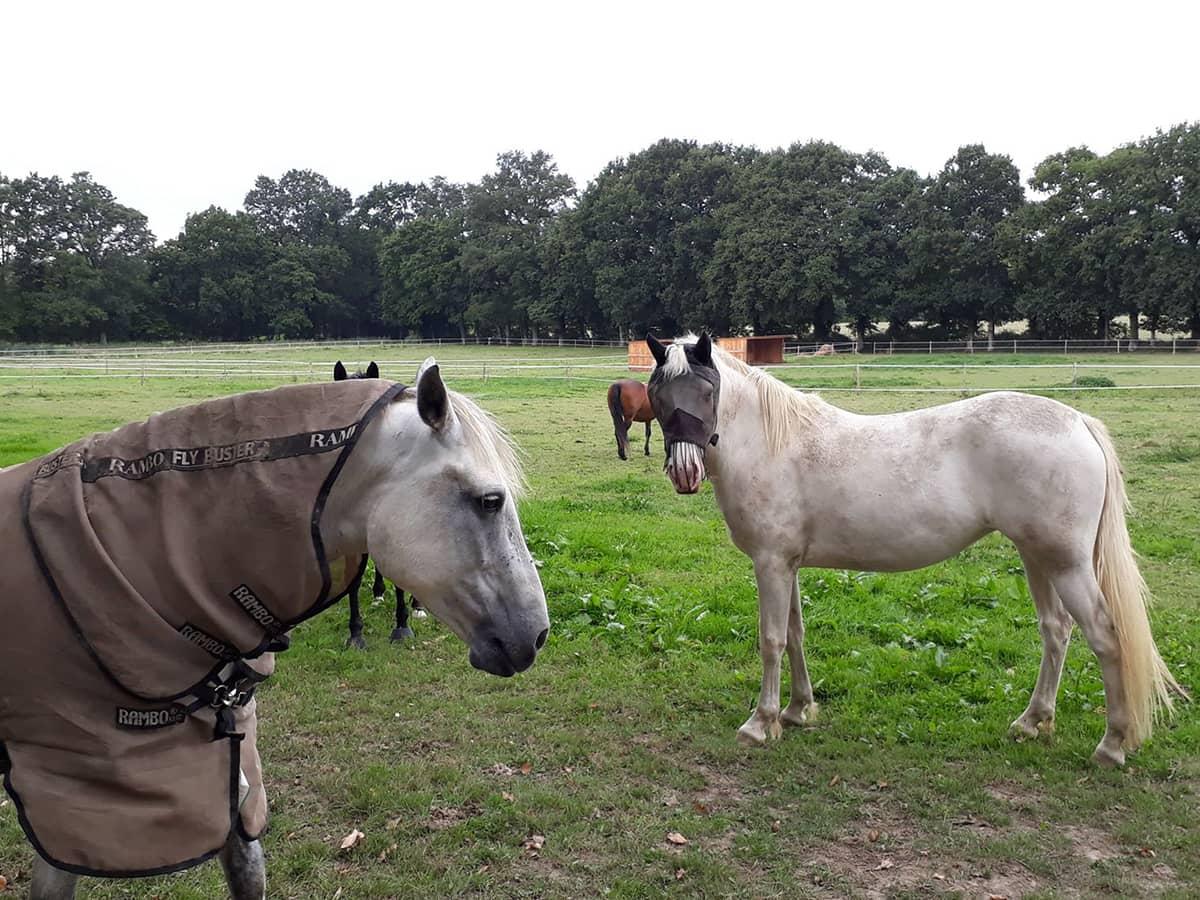 Des chevaux se promenant chez Ékinétik