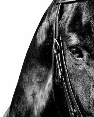 Gros plan sur un cheval