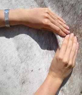 Massage d'un cheval par Ékinétik