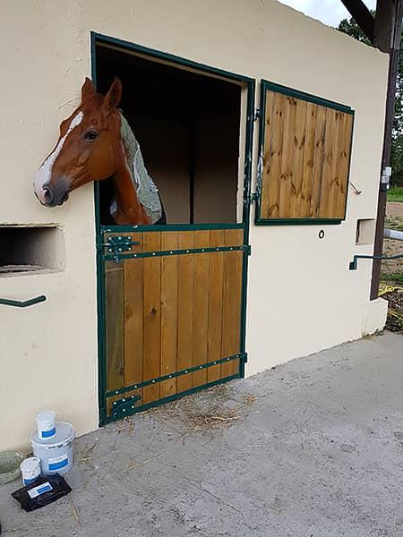 Un cheval en retraite dans notre pension Ékinétik