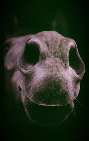 Un cheval qui pointe son museau